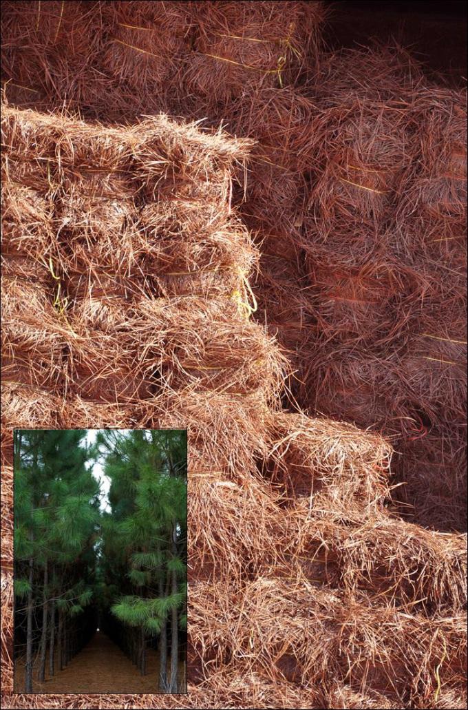 Pine Straw mulch
