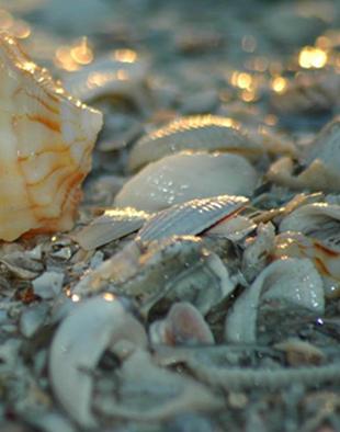 bulk shell