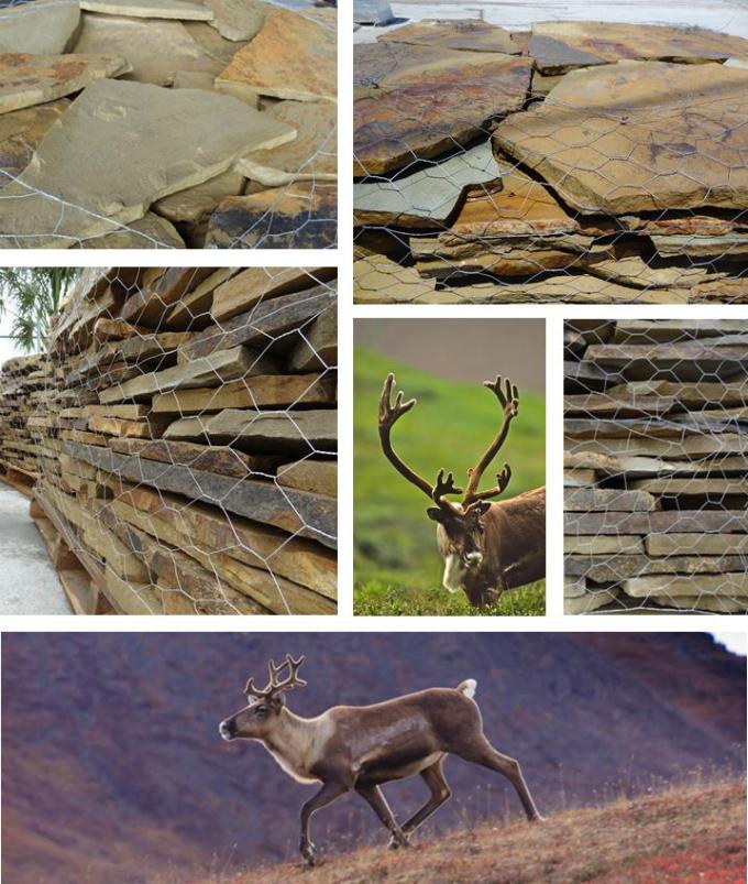 Caribou Beige Stone