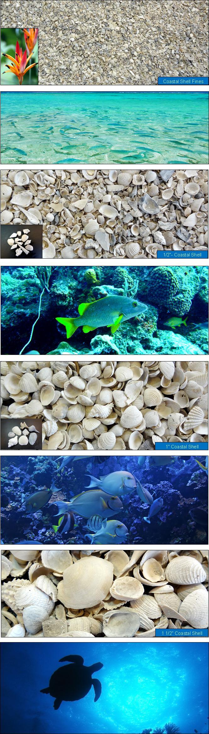 Coastal Shell
