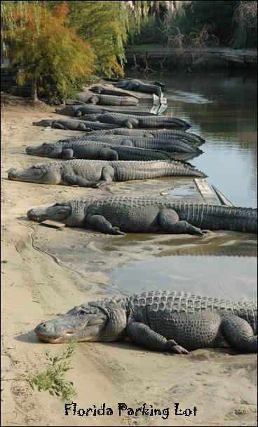 alligator Car Stops parking Bumpers