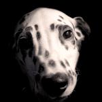 Dog 88